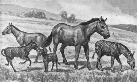 קוד גנטי חולץ משרידי מאובן של סוס פרה-היסטורי