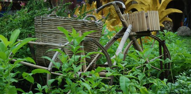 אופני במבוק