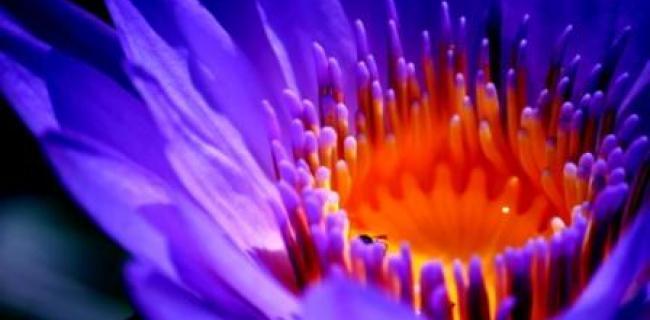 בשיא הפריחה - תערוכה קבוצתית בציור, צילום  ופיסול