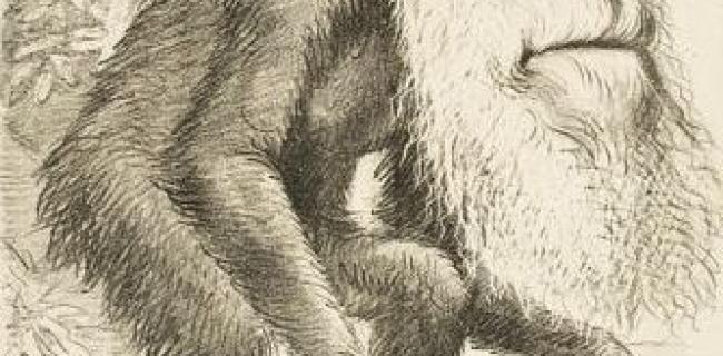 דרווין, אבולוציה והשפעות היסטוריות - קריקטורה 1871