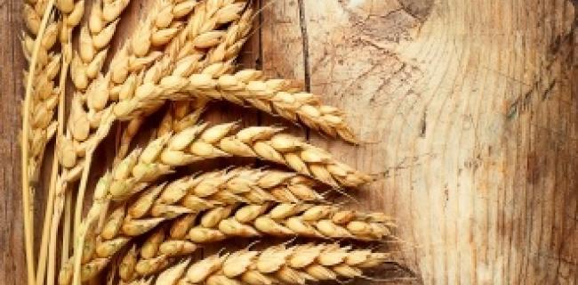 ההיסטוריה של הלחם והבירה