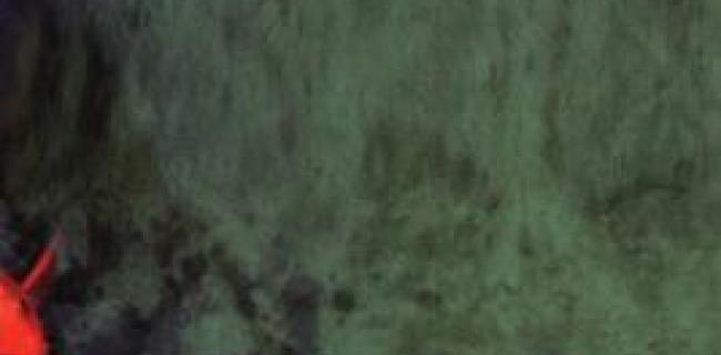גדר חיה - הפלסטיני חולם והישראלית הוזה חלק ב