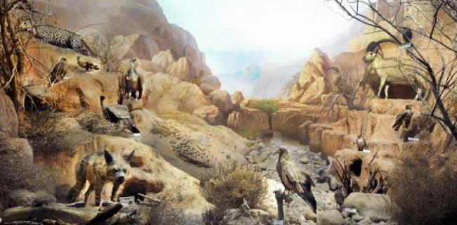 מוזיאון האדם והחי, צילום: יקי אקרמן, באדיבות: הילה קומם