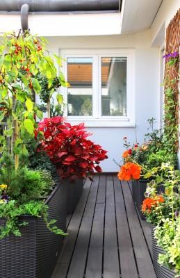 גידול פרחים במרפסת