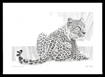 ראלף רזניק, Large Leopard, רישום, 50X70