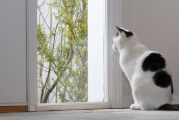 חתול מתבונן בחלון. ההבדל בין החוקים הפנימיים, הקוונטיים – לחיצוניים הניוטונים