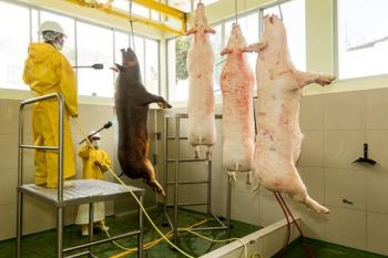 בית מטבחיים. קרניזם: למה אכילת בעלי חיים היא נושא צדק חברתי