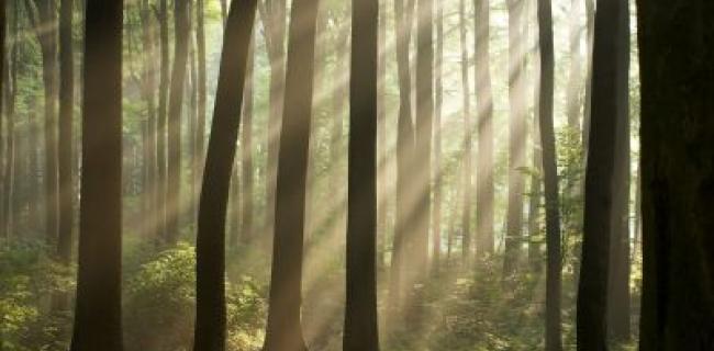 אגו וסאטורי -הארה - יער