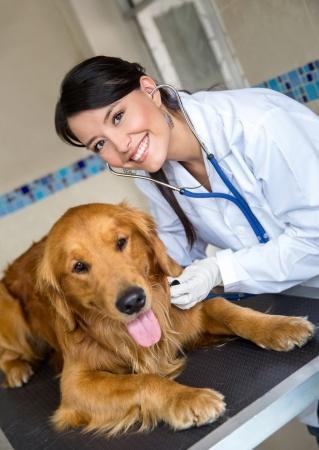 שעלת כלבים: סימפטומים, טיפול וטיפול מונע