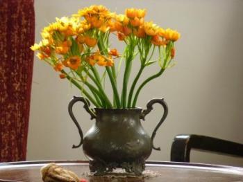 פרחים מדברים - שפת הפרחים